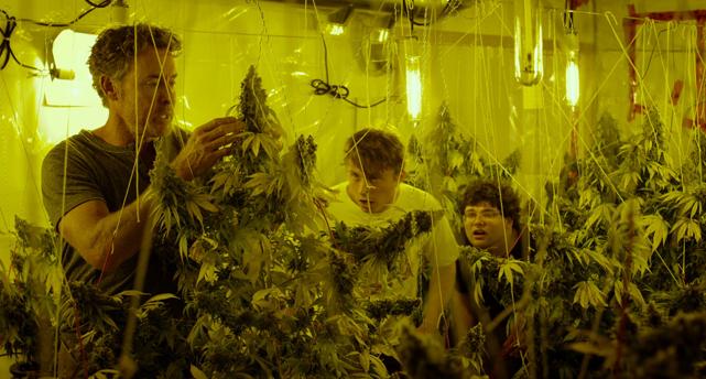 Cannabis Kid Stream