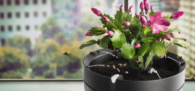 Blumenpracht im Griff mit Parrot Pot