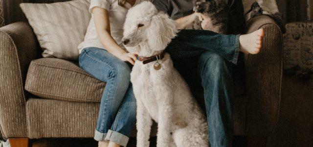 Tracken und Finden: So geht Haustiersicherheit heute